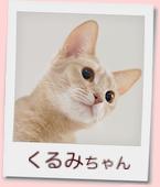 17_prof_くるみ