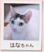 10_prof_はな