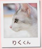 16_prof_りく