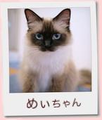 13_prof_めぃ