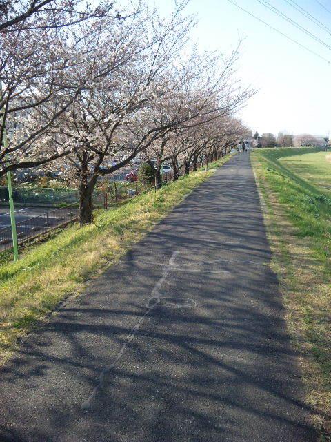 $みずほ台(東武東上線)駅東口徒歩1分の自転車預かり高橋駐輪場-柳瀬川の桜