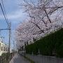 2013桜の季節 […