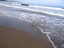 ポンタのブログ-鮭ヒット