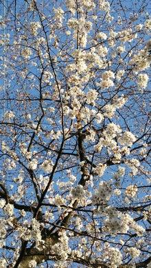 オカメインコのももちゃんと花教室と旅日記-DSC_0100.JPG