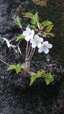 オカメインコのももちゃんと花教室と旅日記-DSC_0129.JPG
