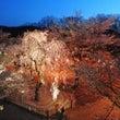 懐古園 桜まつり 小…