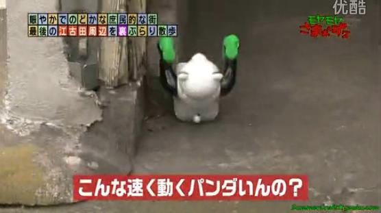 kazukunの神出鬼没-速く動くパンダ