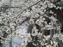 渋谷ジム会長のブログ-2013032314350000.jpg