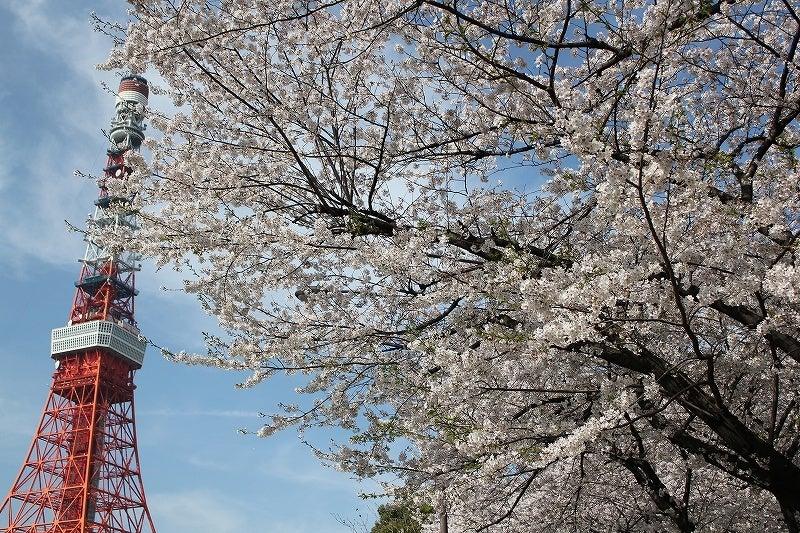 特選街情報 NX-Station Blog-東京タワーと満開の桜