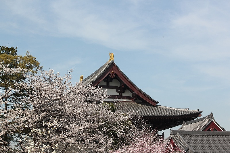 特選街情報 NX-Station Blog-増上寺周辺の桜