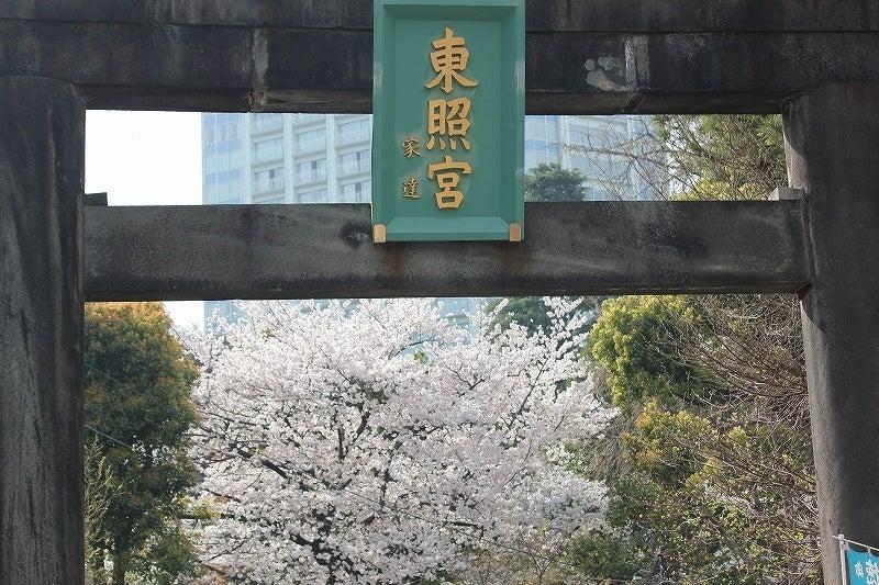 特選街情報 NX-Station Blog-芝東照宮の鳥居と桜