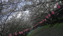 $すすきのBEATの営業雑感 -20130328新田神社