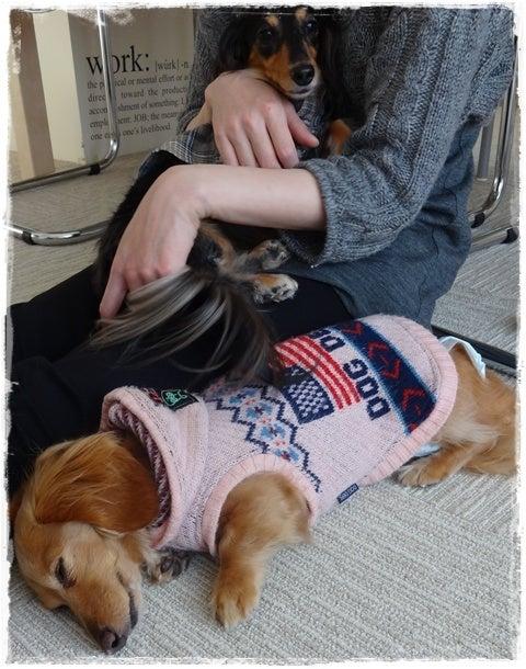 旅犬Lani&Leaのほほん風船記-un cafe