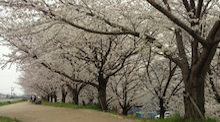 $春風にのって♪自由に・楽しく・ありのままに-2013032913440001.jpg