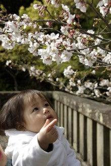 sakuraと桜