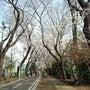 桜 満開 !!