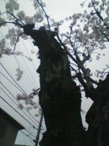 アットホーム・ダッドのツインズ育児日記-2013-03-30_07-17.jpg
