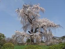 ミスプロの海外競馬-円山公園