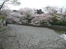 かずのこたんブログ-鶴岡八幡宮2