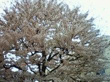 $酒とホラの日々。-桜に氷雨