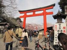 DAISY*DIARY-平野神社1