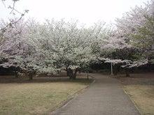 ちょっとそこまで-3.29香澄桜4