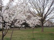 ちょっとそこまで-3.29香澄桜3