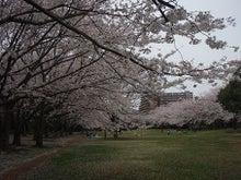 ちょっとそこまで-3.29香澄桜5