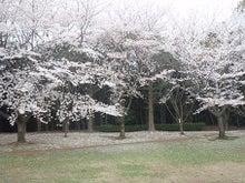 ちょっとそこまで-3.29香澄桜2