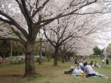 ちょっとそこまで-3.29香澄桜1
