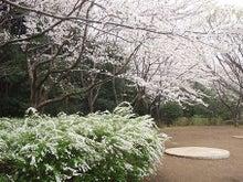 ちょっとそこまで-3.28香澄桜