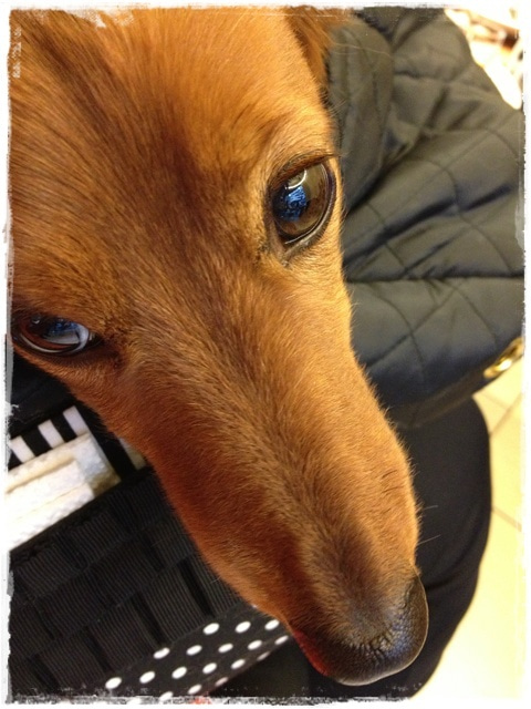 犬旅コンサルタントMiwaのブログ-seat mania