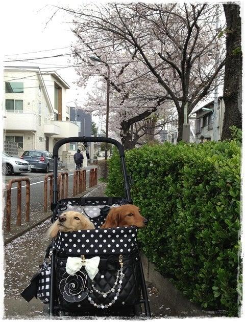 旅犬Lani&Leaのほほん風船記-呑川緑道