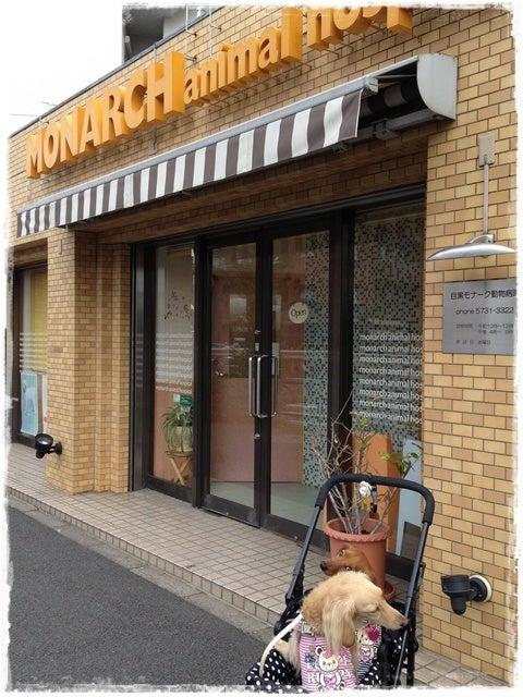 旅犬Lani&Leaのほほん風船記-動物病院