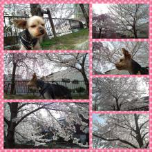 祇園の住人 お水編-PhotoGrid_1364797987008.png