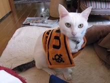 鴻巣の整体院ささき 整体よもやま話-ジャイアンツ愛のある猫