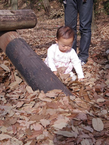 $愛知県みよし市の野外自主保育「みよし もり・そら」のブログ-落ち葉の感触は?