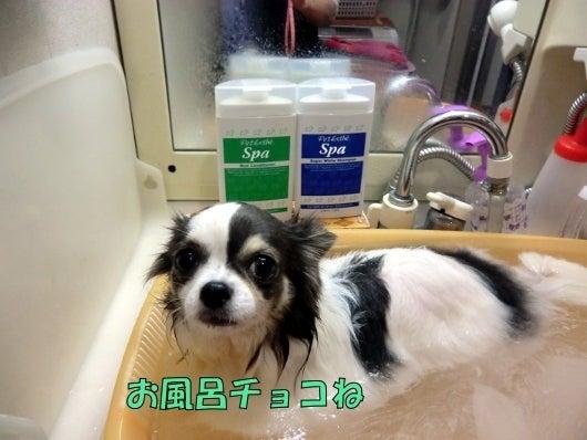 愛犬コンシェルジュ~お散歩仲間の立ち話~-ワンコのかあちゃん056