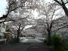 東大阪市立 日新高校 桜