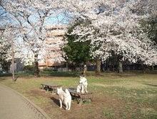 紀州・小雪丸日記(別荘)