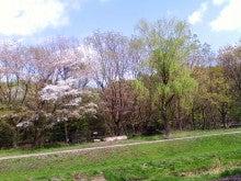コミュニティ・ベーカリー                          風のすみかな日々-柳と桜