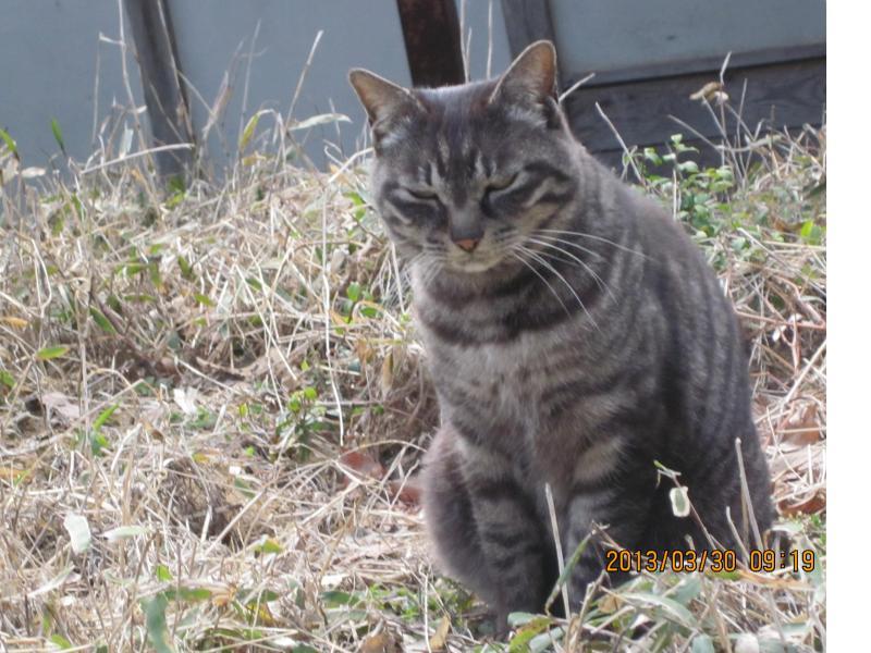 natsumintのブログ-10-2