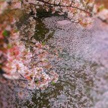 桜・・・桜・・・桜・…
