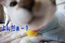 『猫じるし』のブログ-3