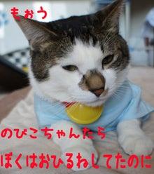 『猫じるし』のブログ-7
