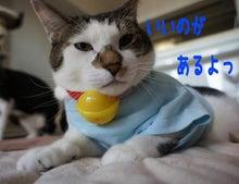 『猫じるし』のブログ-4