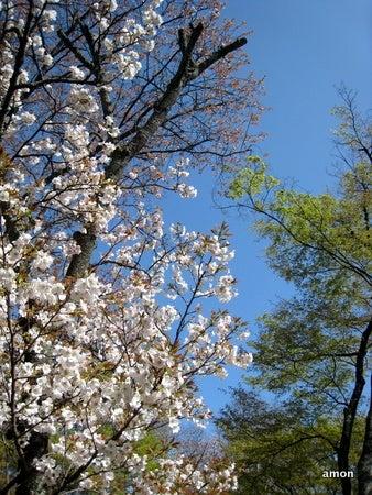 どこへ行こうかな???-青空と桜