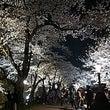 金沢城と兼六園のお花…
