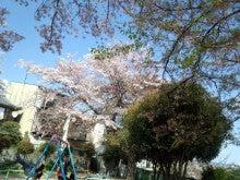 祇園の住人 お水編-IMG_20130410_140329.jpg