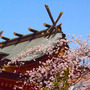 2013 大阪の桜を…
